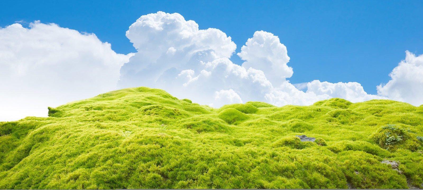 Moosbild.com Moosbilder & Pflanzenbilder die natürliche Dekoration.